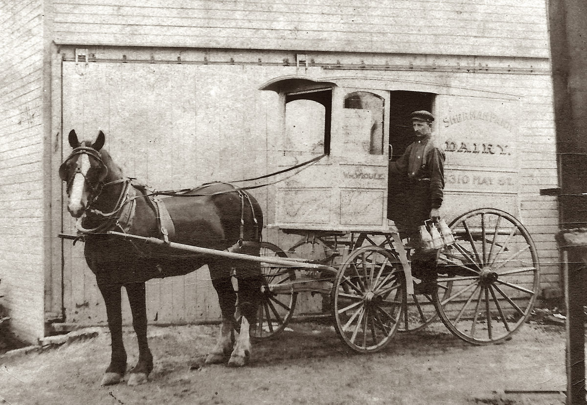 The milk wagon of William Widule, the owner of the Sherman Park Dairy of Chicago around the turn of the century.